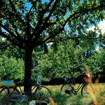 S kolesom na piknik! (foto: Fotografije: Yves Duronsoy )