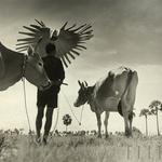 Werner Bischof: Kambodža (foto: Razstava dokumentarnih fotografij agencije Magnum Photos)