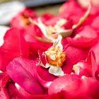 Kraljevsko razpoloženje z oljem za telo - vrtnica