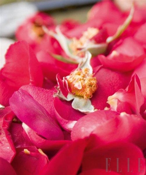 Kraljevsko razpoloženje z oljem za telo - vrtnica - Foto: Fotografija promocijsko gradivo