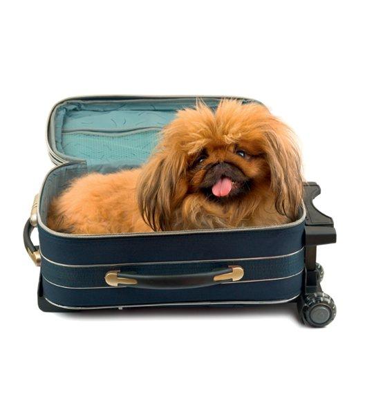 Živali: poletje v hotelu - Foto: Fotografija promocijsko gradivo, Fotografija Shutterstock