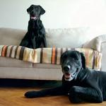 City Dog (foto: Fotografija promocijsko gradivo)