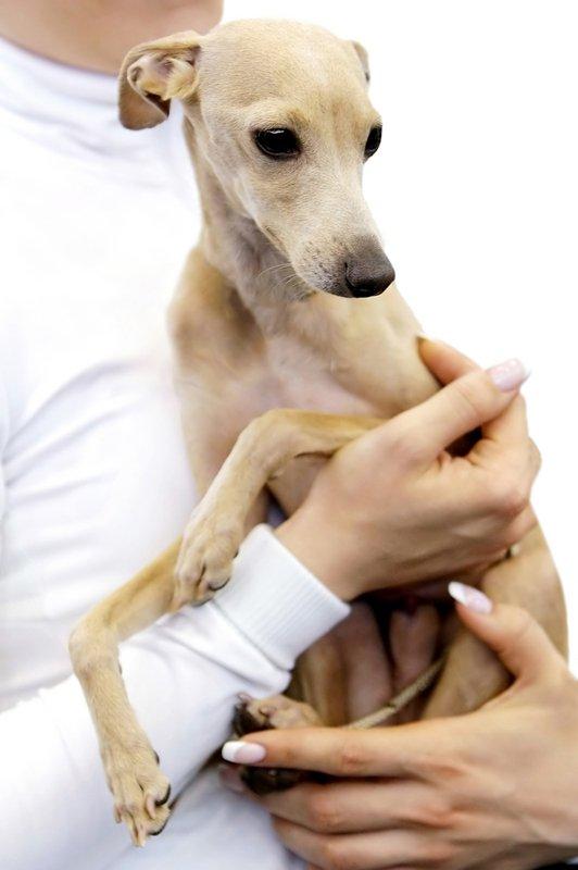 Odgovorno ravnanje s hišnimi ljubljenčki - Foto: Fotografija Shutterstock