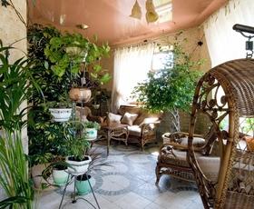 Rastline za boljše vzdušje