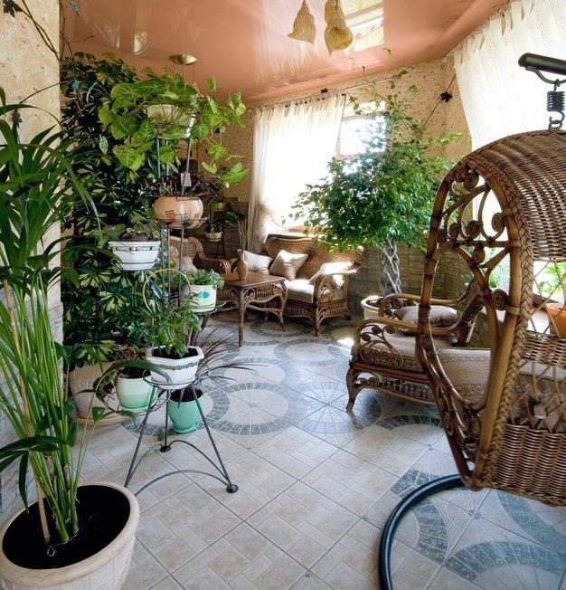 Rastline za boljše vzdušje - Foto: Shutterstock