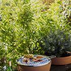 Foto: Hot Pot, zeliščni vrtiček in žar obenem