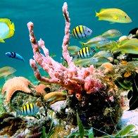 Bahami (foto: Shutterstock)
