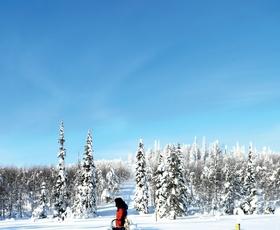 Počitnice na ledu