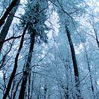 Pogled Urške in Tomaža Draž je tokrat usmerjen v drevesa