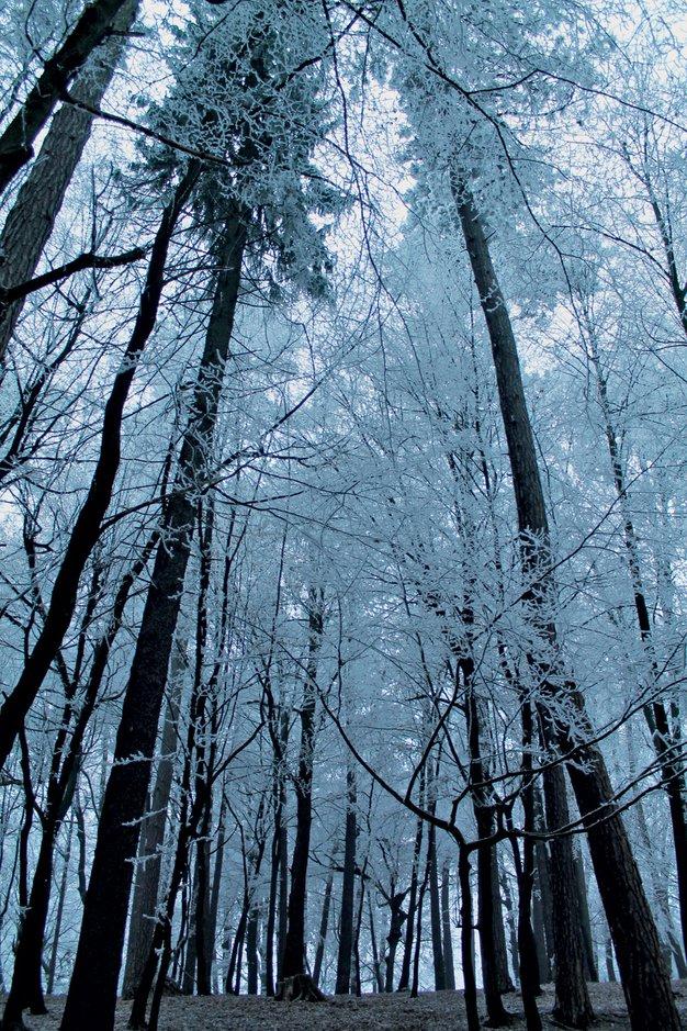 Pogled Urške in Tomaža Draž je tokrat usmerjen v drevesa - Foto: osebni arhiv