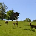 Jelenja farma (foto: LifeClass Terme Sveti Martin)