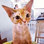Osebno: Tina Piskač Sedej, solastnica mačje kavarne (foto: osebni arhiv)
