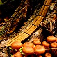 Slovenska lesena kravata z naravno modno vizijo (foto: promocijski materijal)