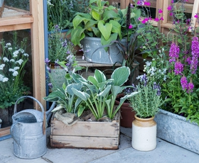 Kako rastlinam pomagati preživeti vroče poletje?