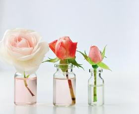 """""""Ena vrtnica na dan odžene leta stran."""""""