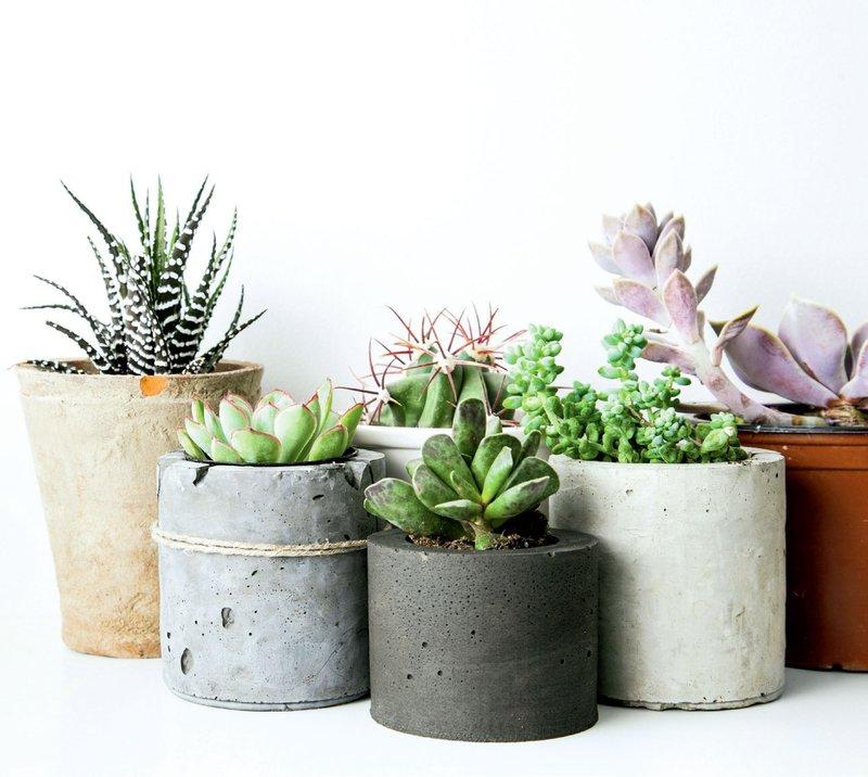 Sočnice in kaktusi