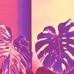 ATELIER TERRA URBANA - Za znamko stojita dolgoletni prijateljici; kostumografinja in modna oblikovalka Mateja Benedetti ter grafična oblikovalka Saša Kladnik. Oblačila, ki jih ustvarjata vključujejo avtorske vzorce in koncepte, ki temeljijo na ogroženih živalskih in rastlinskih vrstah.Lepota in kakovost njunih oblačilsežejo bistveno dlje kot ujame oko. (foto: Promo)