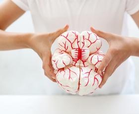 Kako razmigati svoje možgane?