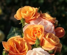 Ideja za izlet: Dnevi vrtnic in zdravih okusov (2. - 4. junij 2017)