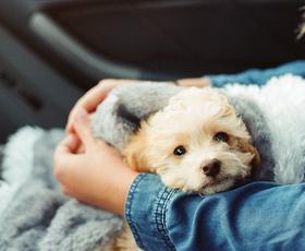 TAKO lahko pomirite domače živali ob pokanju pirotehnike! (nasveti strokovnjakov)