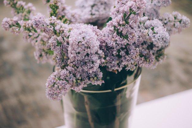 Kako rezano cvetje dalj časa ohraniti sveže? - Foto: Alisa Anton / Usnplash