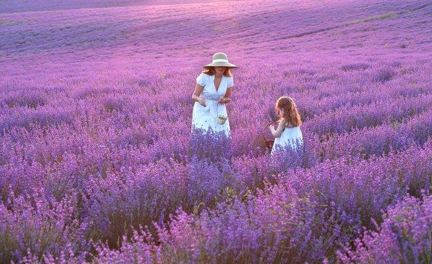 Če sanjate o francoskem podeželju, vam bo ta knjiga zagotovo všeč! - Foto: Profimedia