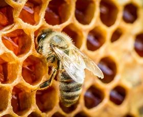 Ob dnevu prihodnosti bodo postavili 4 učne čebelnjake (poznate pomen čebel za našo prihodnost?)