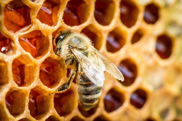 Ob dnevu prihodnosti bodo postavili 4 učne čebelnjake (poznate pomen čebel za našo prihodnost?) - Foto: SHUTTERSTOCK, PROMO