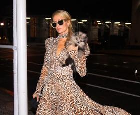 Paris Hilton nas je zopet navdušila nad leopardjim vzorcem