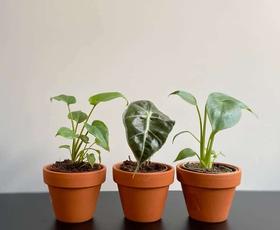 To so zelene in sobne rastline, ki najbolj pripomorejo k poživitvi, sprostitvi in vsesplošnemu boljšemu počutju