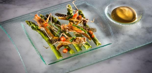 So insekti novo (super)živilo?